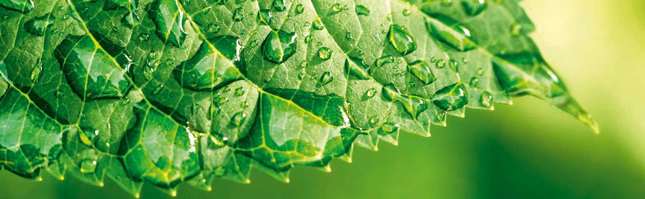 Slider green schomburg
